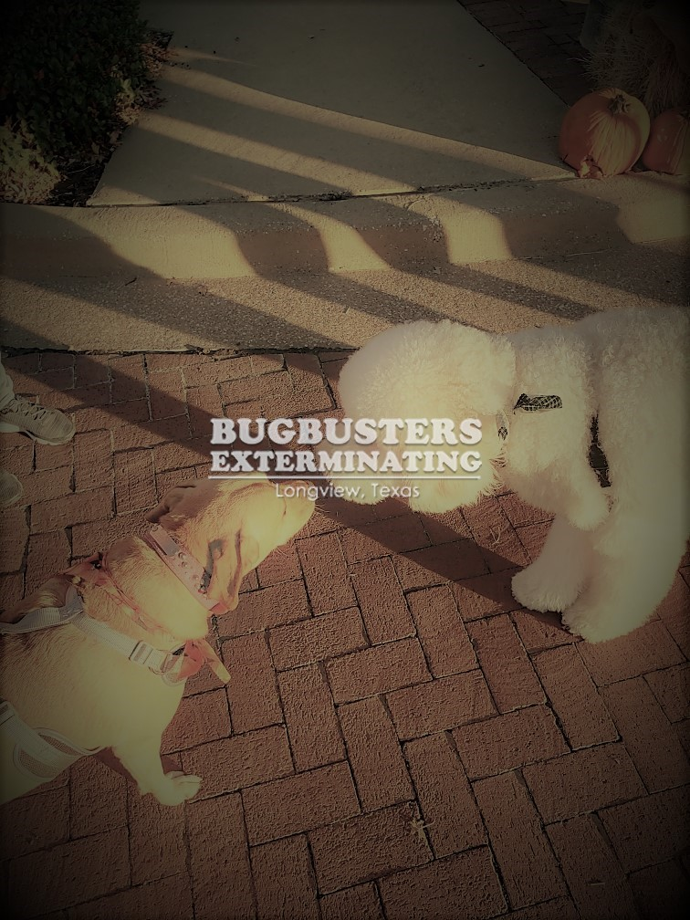 """BUGBUSTERS IN ACTION"""